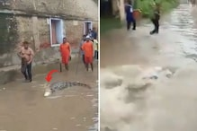 Fact Check: Is This Viral Video of Crocodile in Flooded Streets Really From Patna?
