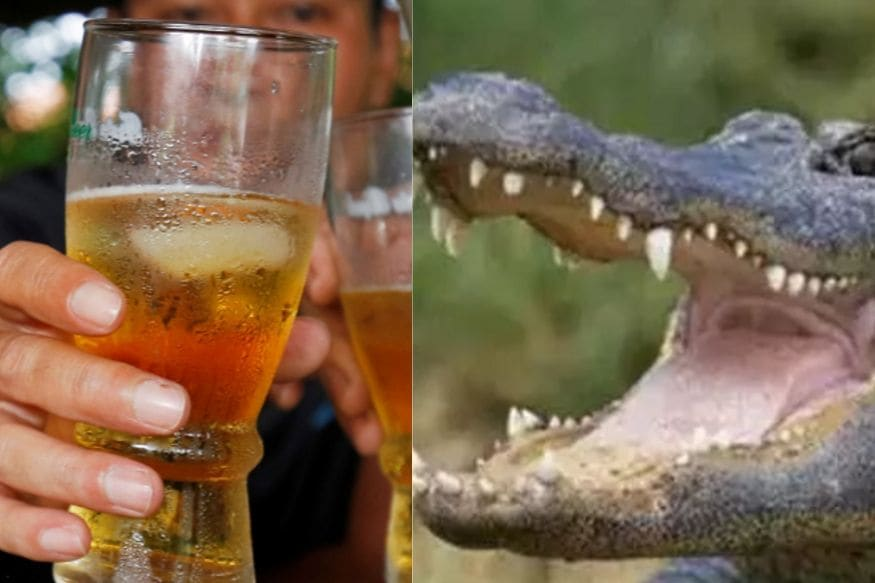 Man Accused of Forcing Small Alligator to Drink Beer, Arrested