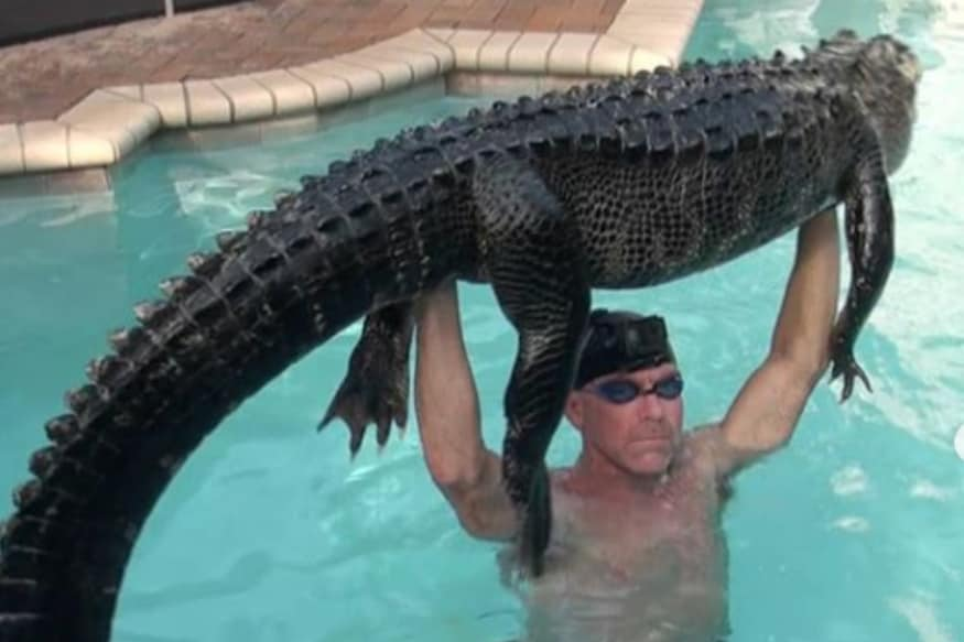 Man Plays With Alligator to 'Tire it Out', Rescues the 8-Foot Reptile With Bare Hands