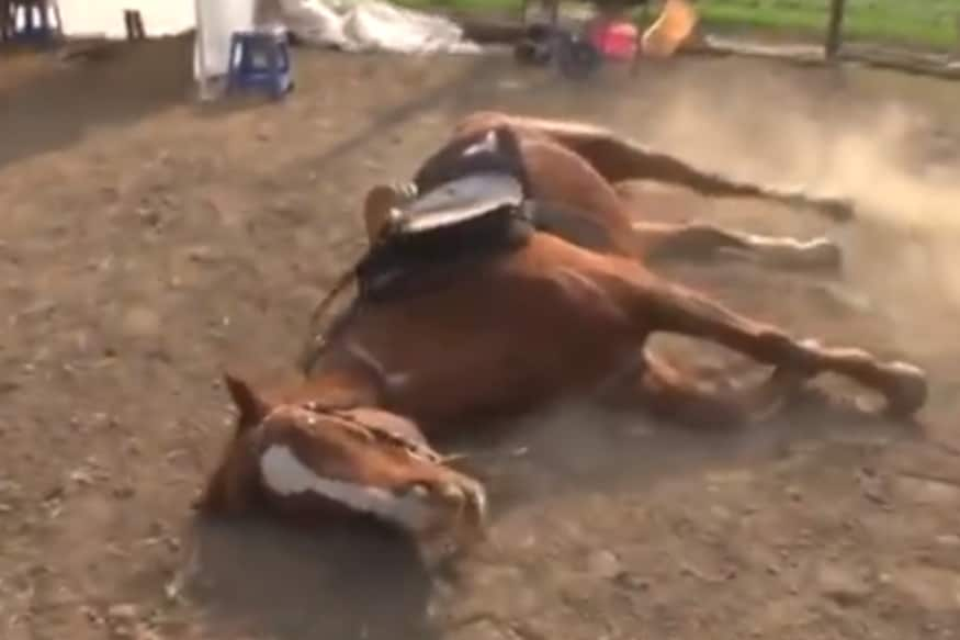 'And the Oscar Goes to...': Lazy Horse Acts Dead Every Time Someone Tries to Ride it