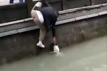 WATCH: Incredible Footage of Puppy Rescue from Canal in China Wins Internet's Praises