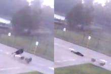 Watch: Man Survives Lightning Strike While Walking His Dogs