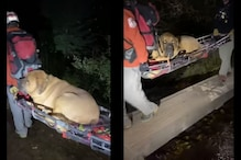 Watch: Rescue Team Carries Down a Tired 86 kg Dog from Hiking