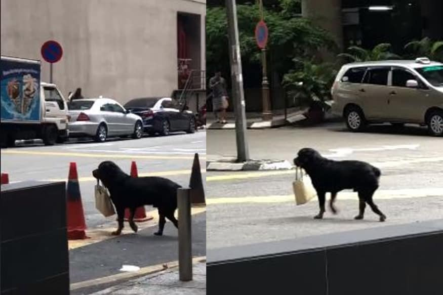 Man's Best Friend? Viral Video Shows Dog Carrying Handbag For Human
