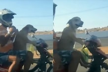 Watch: Twitter Expresses Concern over Dog Riding Motorcycle without Wearing Helmet