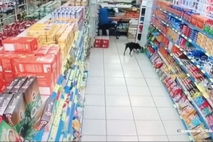 Watch: Dog Runs into Supermarket and Steals Packet of Coconut Donuts