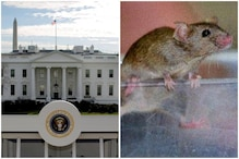 'Chase Underway': Mouse Drops from Ceiling on Reporter's Lap in White House's Press Room