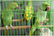 Thirteen Parrots Were 'Produced' in a Delhi Court Today, Here's Why