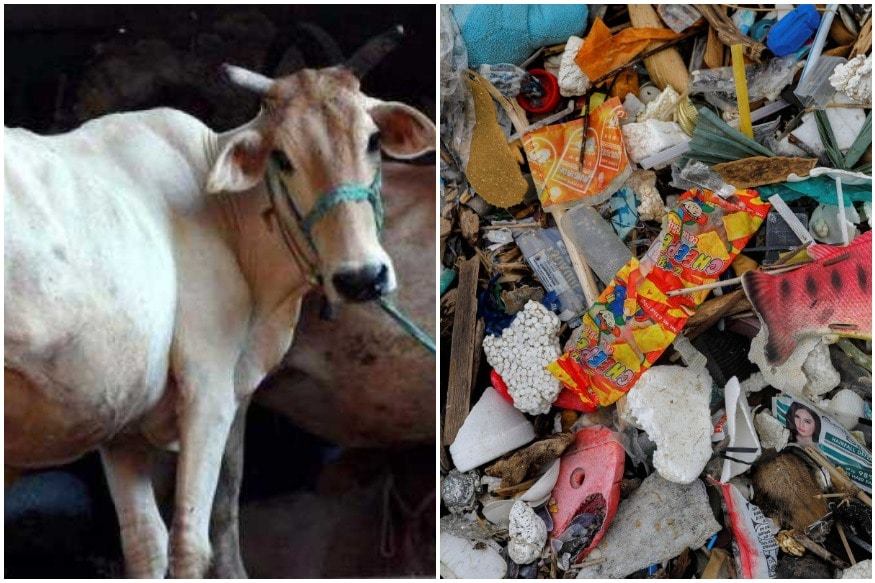 Surgeons Remove 52 Kg Plastic from Ailing Cow's Stomach in Tamil Nadu