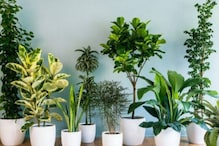 Desk Plants Can Reduce Stress At Work, Says Study