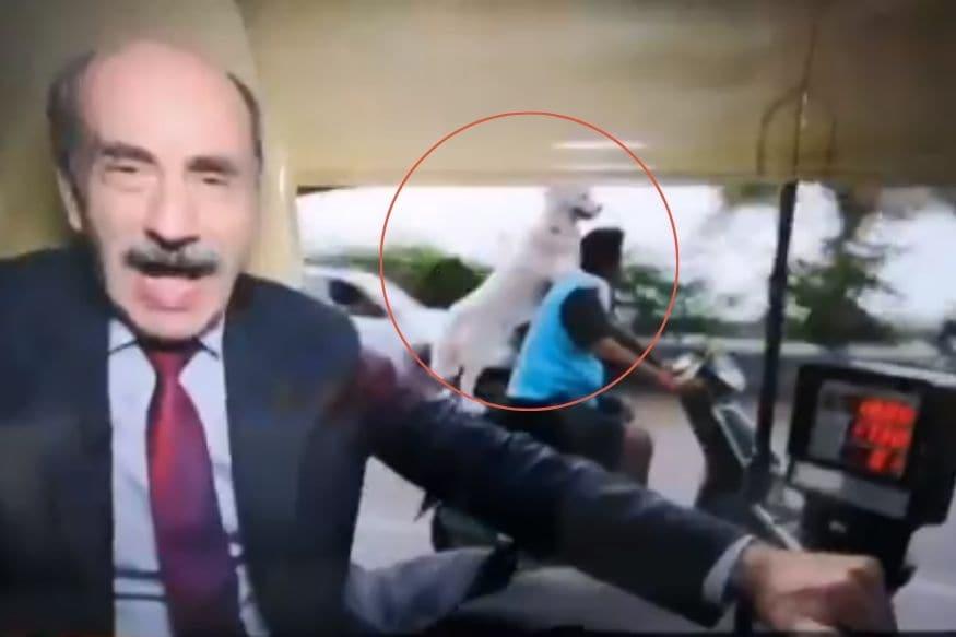 Most Desi Photobomb? Dog Riding Pillion on Bike Steals BBC Anchor's Thunder