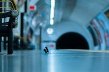 Picture Of Two Mice Fighting At London Underground Shortlisted For Wildlife Photo Of The Year