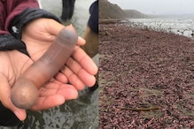 Thousands of 'Penis Fish' Wash Up on California Beach and Social Media is 'Shook'