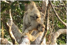 Scientists Find Previously Undiscovered Subspecies of 'Titi' Monkeys Brazil