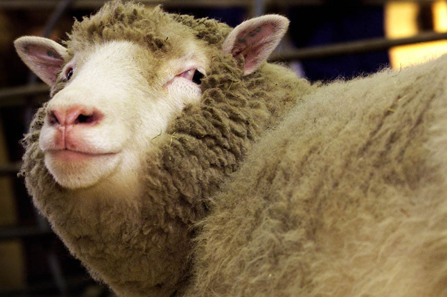 'Don't Have Many Animals to Produce It': Singapore Min Sheepishly Admits Woolly Thinking Over Cotton's Source