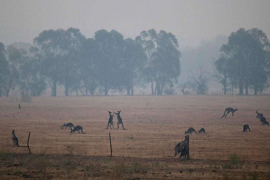 Rainstorms Bring Respite from Raging Bushfires Across Eastern Australia, But Flood Threat Looms