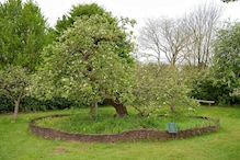 Seeds from Newton's Apple Tree Are Being Used to Grow a New One at His England Home