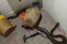 Snake, Blood and Cutter: How This Woman Fought Reptile Which Bit Her Inside a Toilet