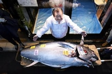 A Tuna Sells For 1.8 Million Dollars at the First Auction After New Years in Tokyo