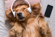 Pawsome! Spotify Now Has Special Pet Playlists Curated Specifically For Your Furry Friends