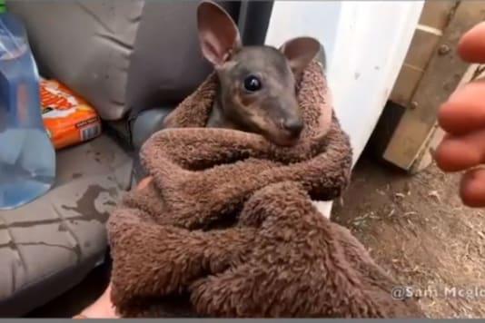 Man Who Rescued Baby Kangaroo from Australian Bushfire is the Internet's Newest Hero