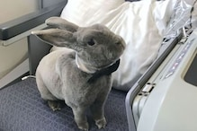 Meet Coco the Rabbit in a Bow-Tie Who Flew First Class and Even Had Her Own Seat