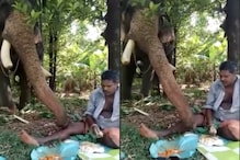 Video of Hungry Elephant 'Stealing' Rice from Man's Plate Has Grabbed Internet's Attention