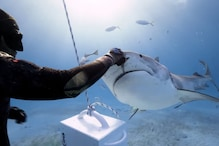 WATCH: Mesmerizing Video of Diver Hand-Feeding Tiger Shark Will Give You Goosebumps
