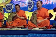 Watch: Praying Buddhist Monk Gives in after Attempts to Resist Cat Trying to Grab Attention