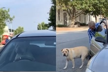 WATCH: Dog Honks Impatiently After Owner Leaves Him Alone in Car to Go Shopping