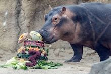 Zoo Uses Fiona the Hippo's Third Birthday to Raise Money for Animals Affected by Australian Bushfire