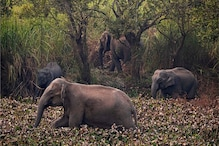 Herd of Wild Elephants Stray Into Villages For Food - PHOTOS