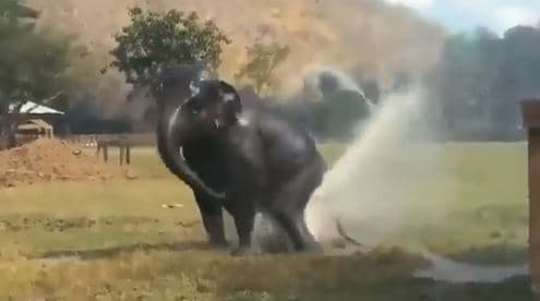 Watch: Elephant Playing with a Water Sprinkler is Best Thing on the Internet Today