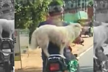 Man Fined by Kerala Police for Letting His Dog Ride Motorcycle After Video Goes Viral