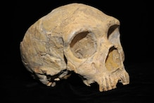 Archaic 'Ghost Population' of Humans from 500 Million Years Ago Discovered in Africa