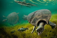 Fossils Suggest Car-sized Prehistoric South American Turtle Was Built for Battle