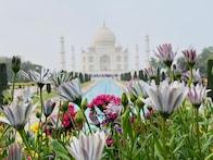 Taj Mahal Closes for Visitors From Today Over Coronavirus Fears