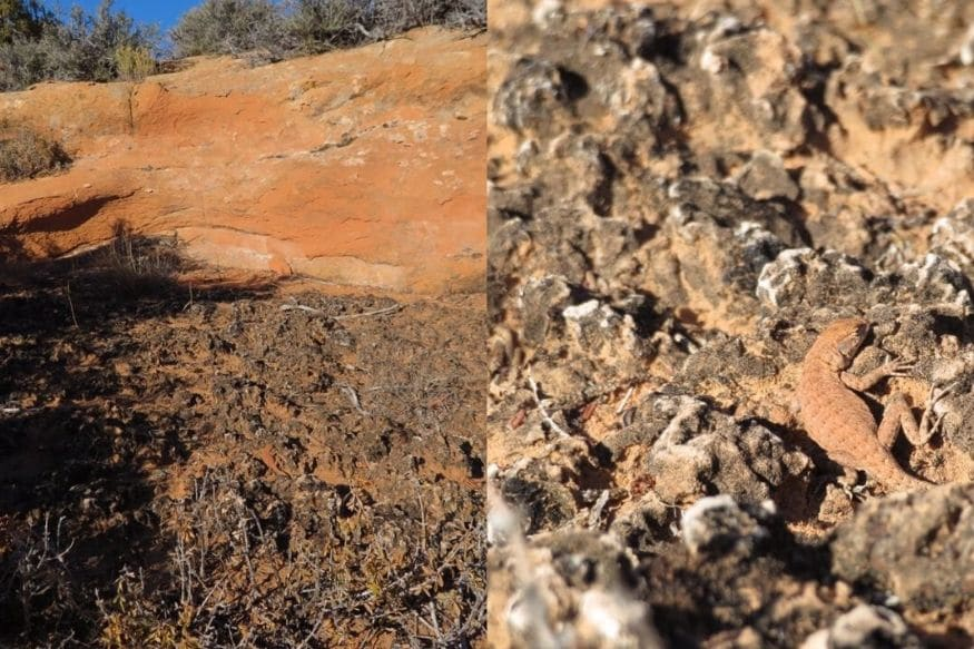 Can You Spot the Lizard Camouflaged in this Photograph That's Driving Twitter Crazy?