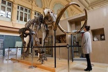 Last of the Woolly Mammoths Suffered from Genetic Defects like Male Sterility Before Going Extinct