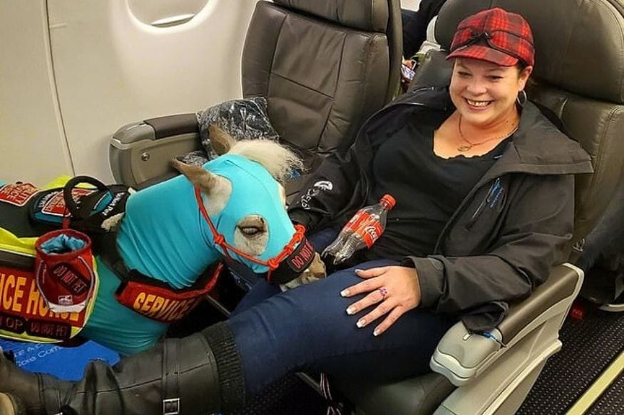 Meet Fred, the Mini Service Horse, Who Travelled First Class to California