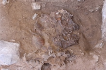 Did Neanderthals Bury their Dead With Flowers? Iraqi Cave Unearths Intriguing Clues