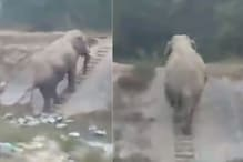 WATCH: Video of Elephant Using Staircase to Reach an Elevated Road Goes Viral