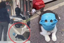 Cats in China are Now Wearing Facemasks as the Coronavirus Outbreak Worsens