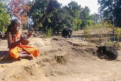 Shahdol: In this undated photo, Sitaram, a monk,  plays a psalm as sloth-bears  gather around him, in Shadol district of Madhya Pradesh. Sitaram claimed that the bears appear from the forests to listen to his hymn and to-date have caused no harm to anyone. (PTI Photo)
