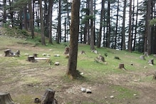 Amid Debate Over SC Ban, Govt Approved Felling 83,000 Trees Since 2014 for Highways in Himachal
