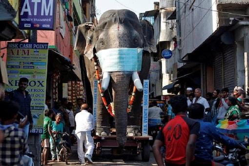 A replica of an elephant with a facemask on is being moved through a street to create awareness against coronavirus disease in Chennai. (Reuters)