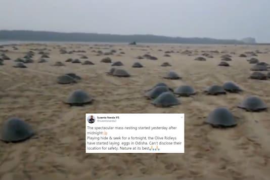 Screenshot from video tweeted by Susanta Nanda IFS / @susantananda3.