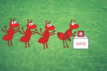 Sneezing Dogs and Dancing Bees: Not Just Humans, Animals Have Ways to 'Vote' Too