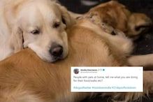 'Can I Take My Dog Out For Walk?' Pet Parents are Worried After India Goes Under Lockdown