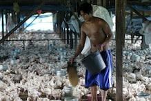 Philippines Detects Highly Infectious Bird Flu Virus in Quail Farm, Warns of Outbreak